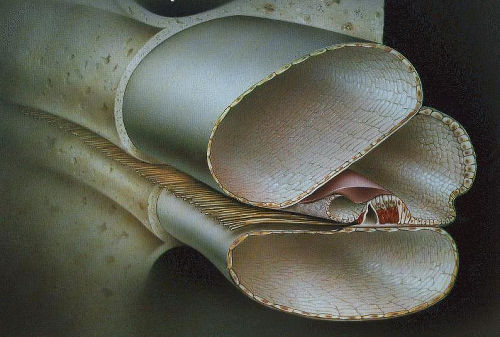 Cortijev organ