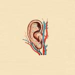 Zakaj-v-tisini-slisimo-poslusanje-audiobm-audio-bm-slusni-aparati-svetovanje